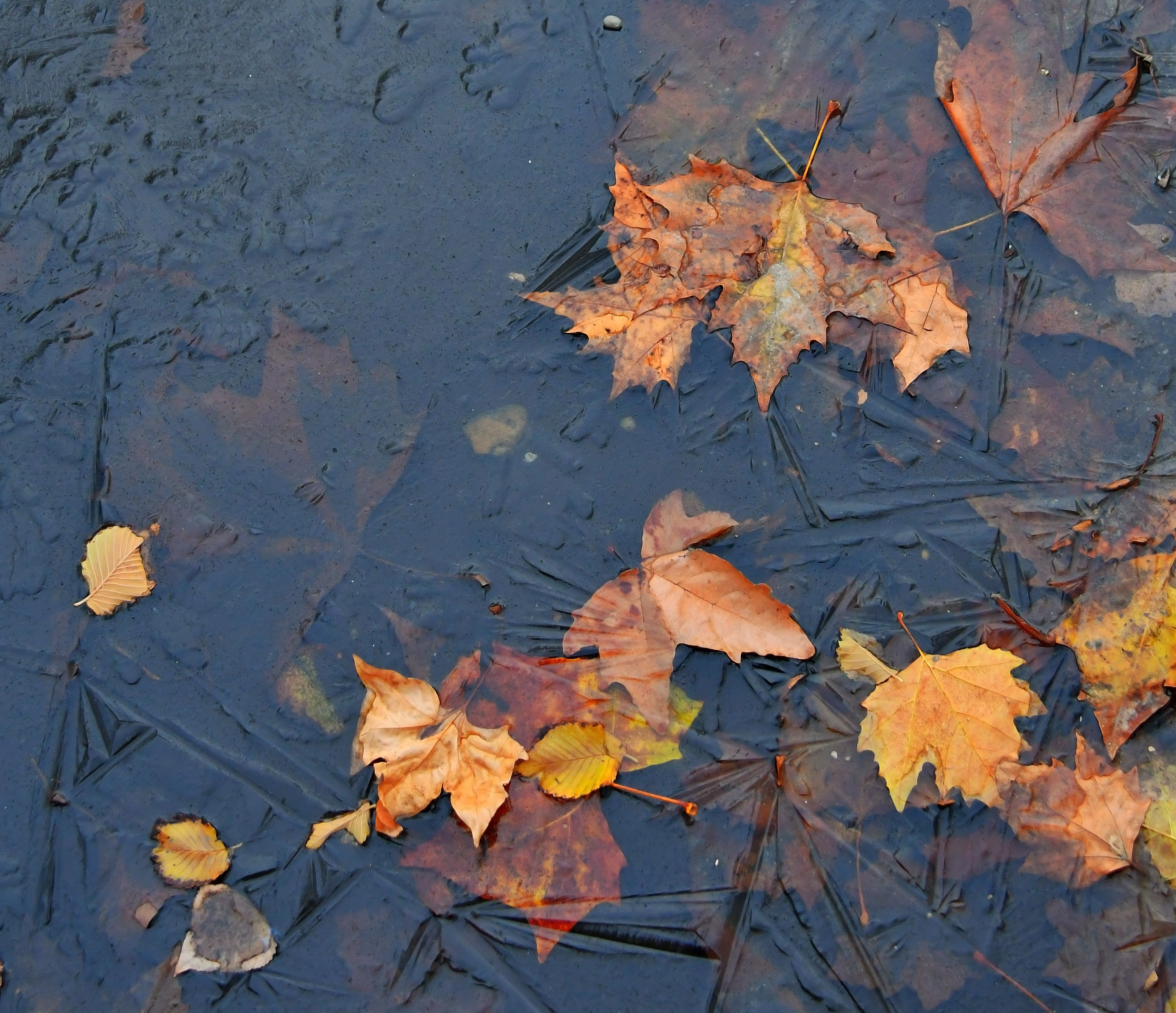puddle-autumn-water-frozen-ice-leaf-1459667-pxhere