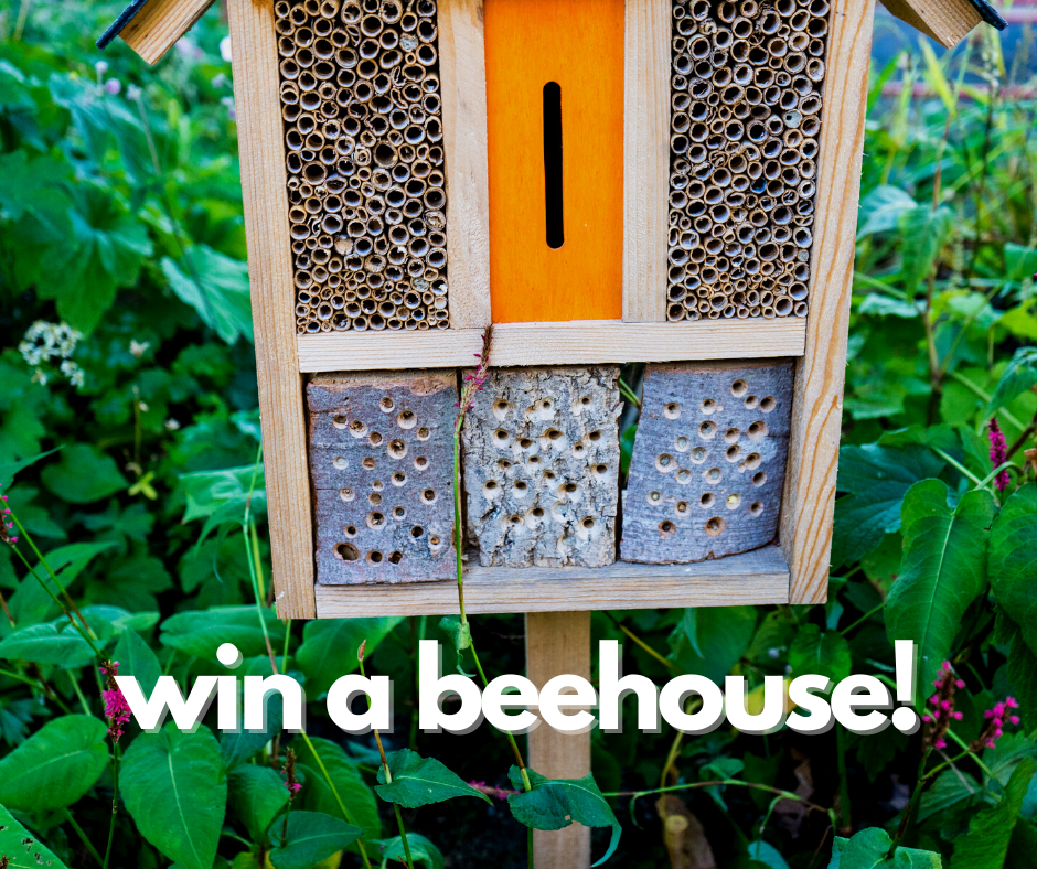 win a beehouse! fb